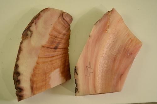 (2) Dall Sheep horn slabs